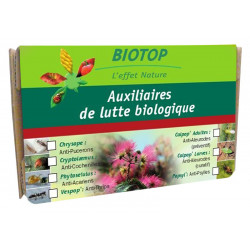 Chrysope 100 larves anti...