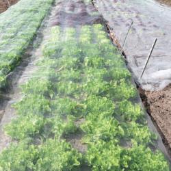 Anti-cochenilles prêt à l'emploi 1L