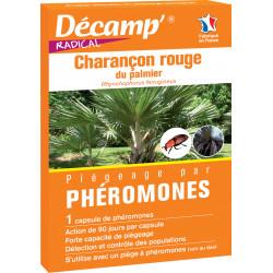 Phéromone charancon rouge...
